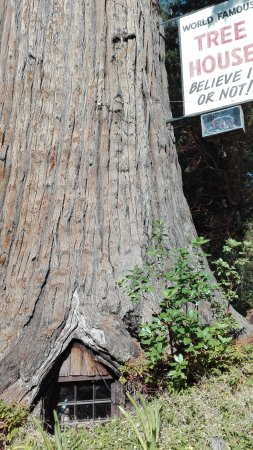 Famous Tree Houses world famous tree house (piercy, ca): top tips before you go (with