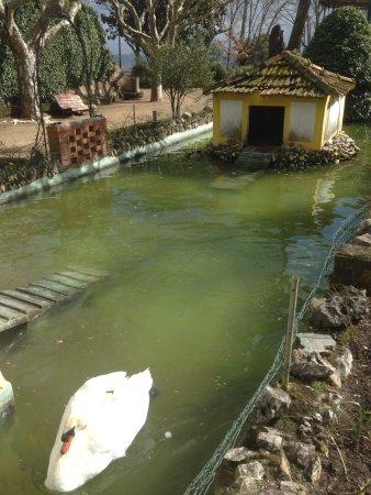 Abrantes, Portugal: Jardim do Castelo - Cuidado com os cisnes, são raçados de cão...