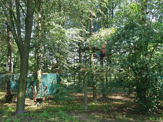 Skierniewice, Polonia: Park linowy usytuowany w środku zagajnika ma sporo atrakcji.