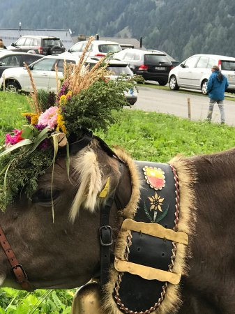 Mustair, Suiza: stolze Tiere
