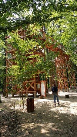 Kaszo Lombkorona Trail