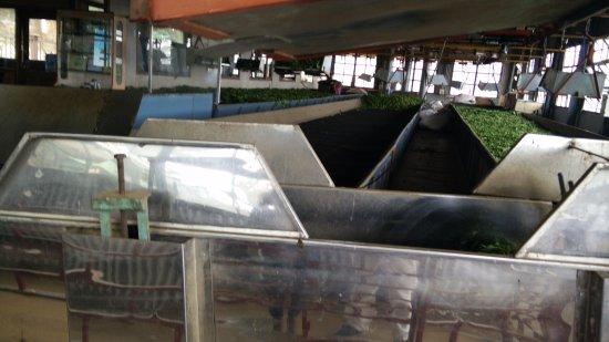 Dodabetta Tea Museum and Factory: Tea Making process