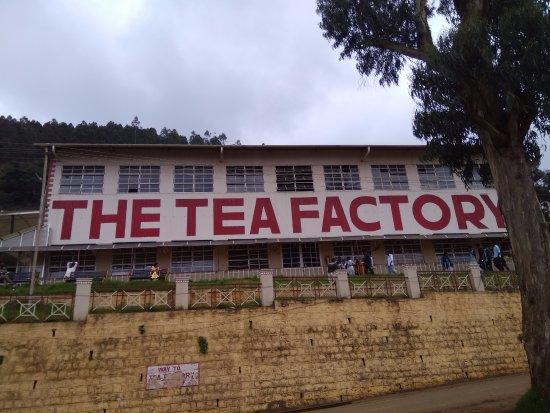 Dodabetta Tea Museum and Factory: Tea Factory, Ooty