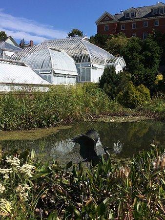 Northampton, MA: Greenhouse and garden