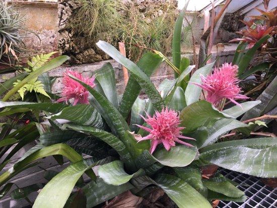 Northampton, MA: Beautiful plants in greenhourse