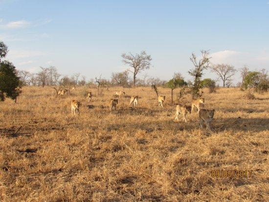Bilde fra Honeyguide Khoka Moya & Mantobeni Camps