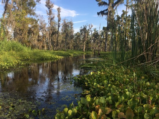 Kayak Swamp Tours: photo3.jpg