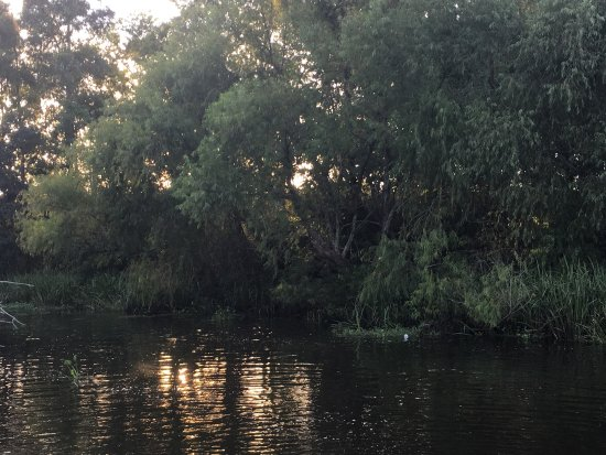 Kayak Swamp Tours: photo4.jpg