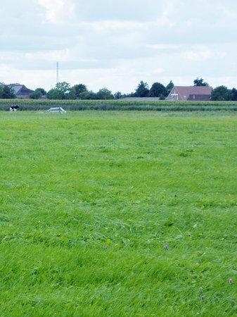 Butjadingen, Germany: Die Mühle aus der Ferne