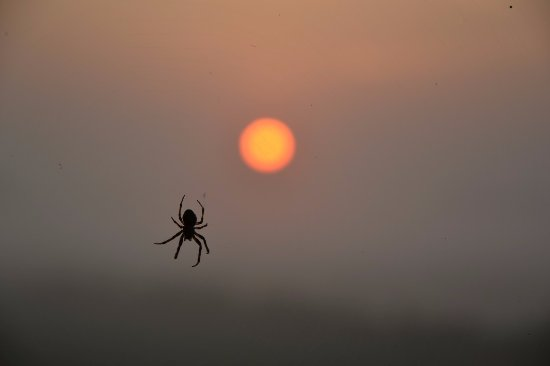 Schipluiden, Belanda: Ragni ovunque, ma alba bellissima!