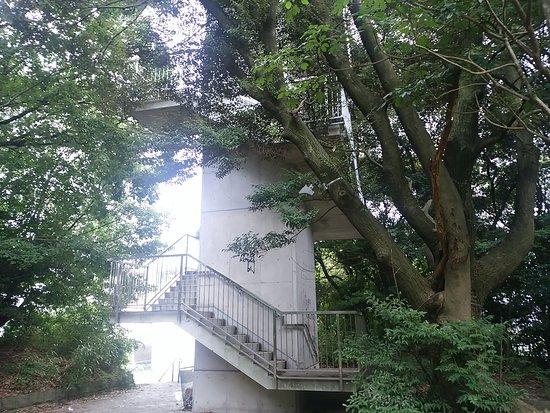 Observation Deck in Heiwa Minami Ryokuchi Preservation Area