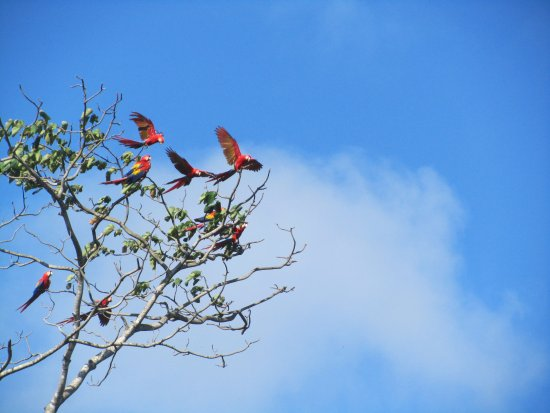 Πλάγια Σαμάρα, Κόστα Ρίκα: Neighbors!