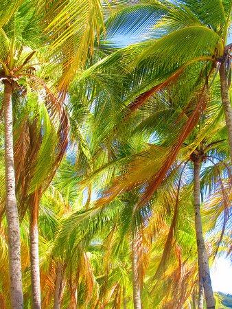 Πλάγια Σαμάρα, Κόστα Ρίκα: Summertime in Costa Rica!