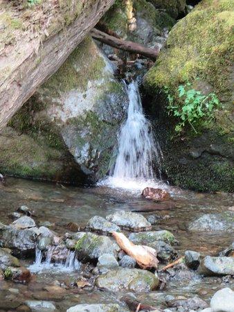 Quinault, WA: Base of Merriman Falls