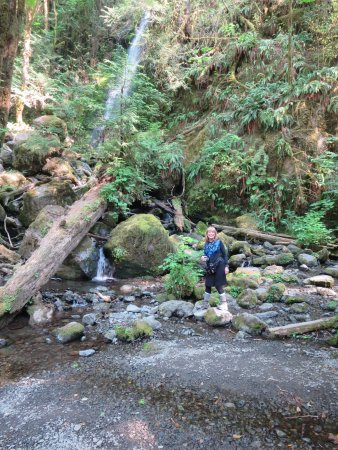Quinault, WA: Merriman Falls is more a trickle in mid August of a very dry summer