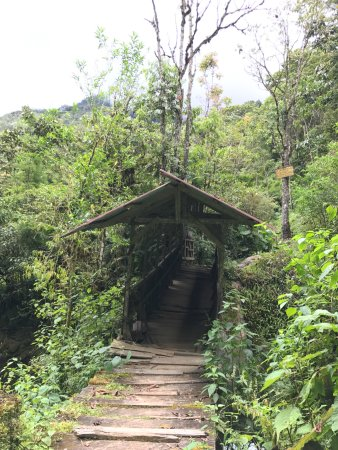 Chirripo National Park, Costa Rica: cute bridge in trails!