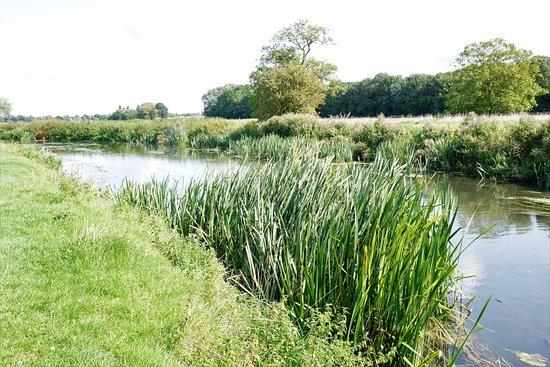 Grantchester Village: Walk along the river ...