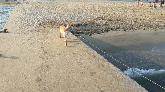 Les Mures: Pablo aussi a bien aimé la plage