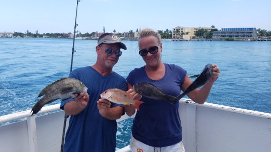 Dolphin bild fr n lady stuart i deep sea fishing stuart for Lady stuart deep sea fishing