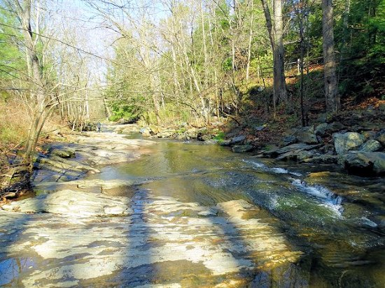 Botanical Gardens at Asheville: lovely creek with large flat rocks