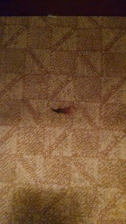 Rifle, CO: Unknown object on carpet on the other side of the bed