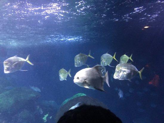 Tennessee Aquarium: photo7.jpg