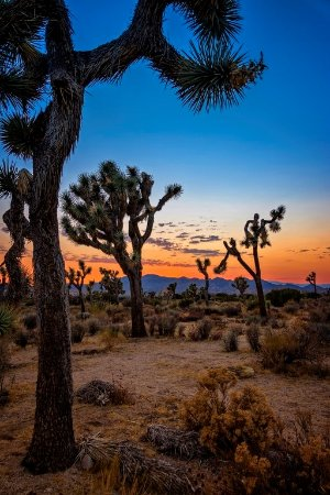 Twentynine Palms, Kaliforniya: Beautiful color in the settinf sun.