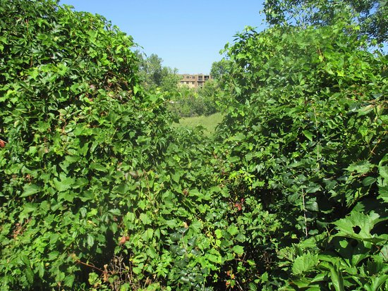 Columbia Heights, MN: View the lake through the foliage