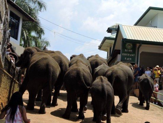 Pinnawala, Sri Lanka: a casa