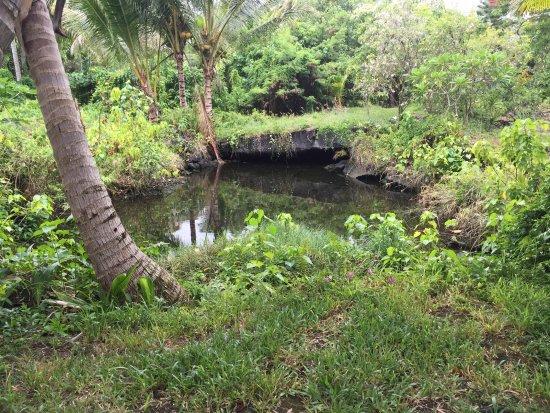 Pahoa, HI: Spring fed pools in residential yards