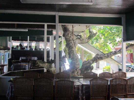 Speyside, Tobago: Tree inside restaurant