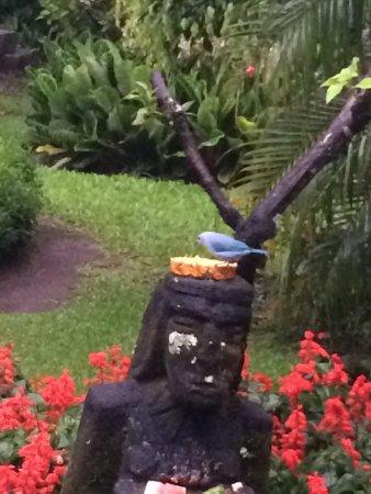 Boquete Garden Inn: photo2.jpg