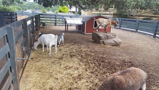 Lawton Stables : The other animals on the farm