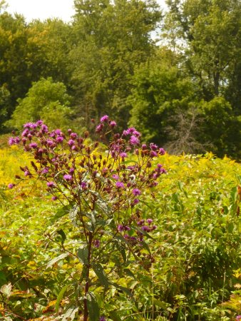 Glenwood, Nueva Jersey: Yellow, orange, purple wildflowers