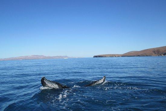 Baja Tours Mexico: Whale shark fin