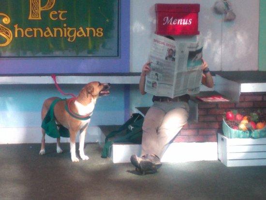 Pet Show Picture Of Busch Gardens Williamsburg Williamsburg Tripadvisor