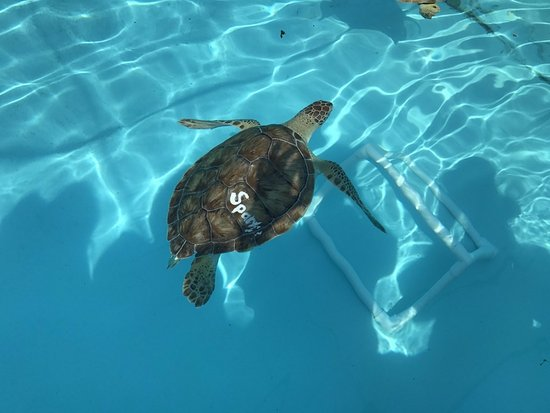 The Turtle Hospital : Clean water, good care