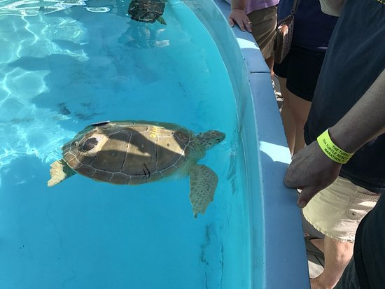 The Turtle Hospital : Get up close and personal