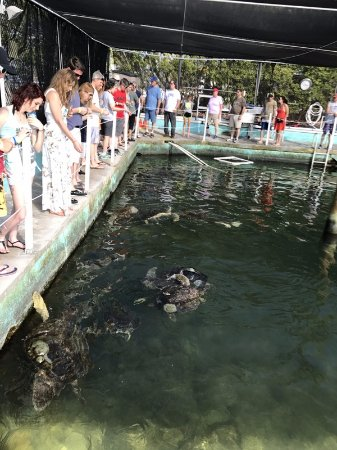 The Turtle Hospital : Feed the turtles while on tour