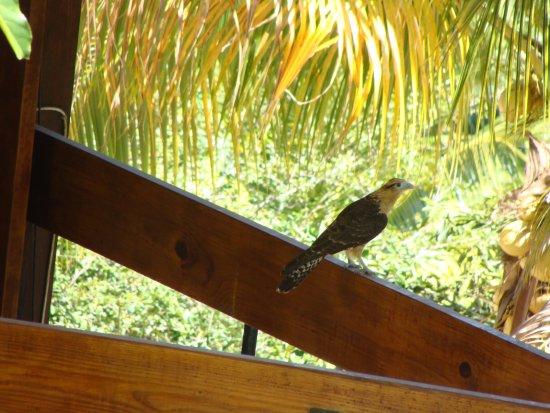 Maracas Bay, Trinidad: Sites