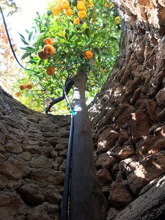 Forestiere Underground Gardens: photo0.jpg