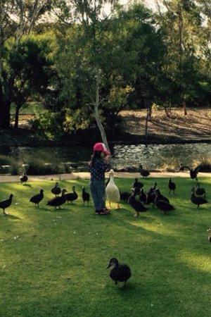 Thorndon Park : Playing among the ducks