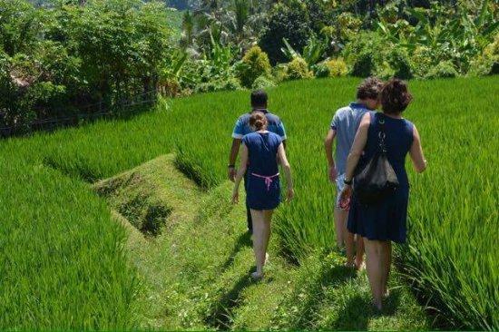 Pantai Lovina, Indonesia: treeking at rice field