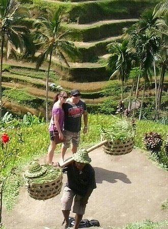 Lovina Beach, อินโดนีเซีย: Tegalalang rice terrace