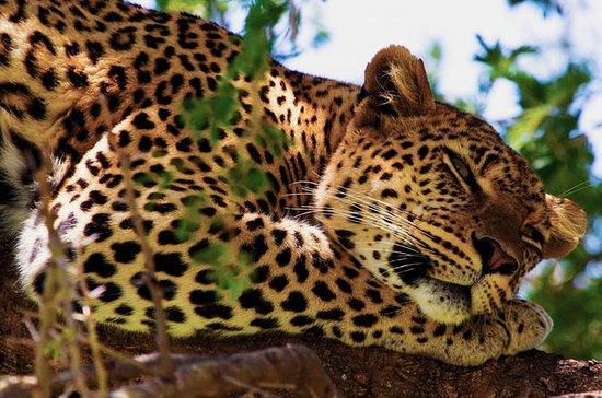 Yala Safari Experience