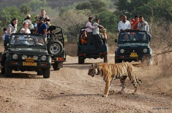 Ranthambore National Park - A Two Night Wildlife Adventure From...