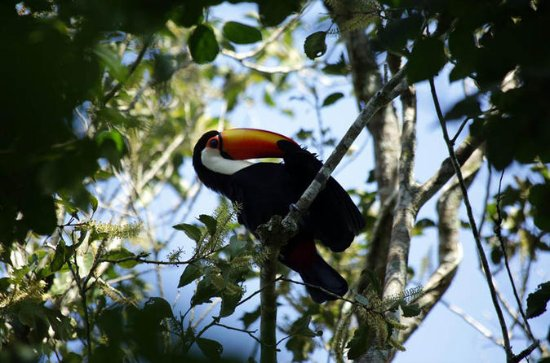 BirdWatching in Iguazu Falls - 2...