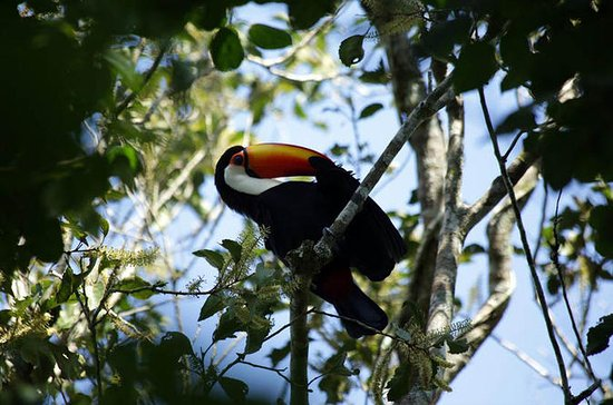 Yacutinga Lodge - Birds of the Jungle