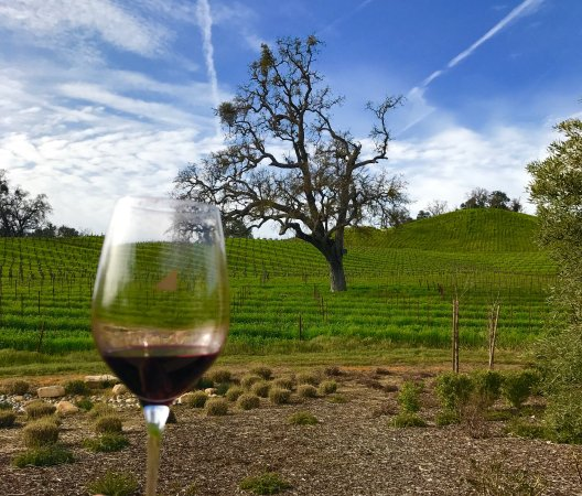 Paso Robles, CA: photo1.jpg