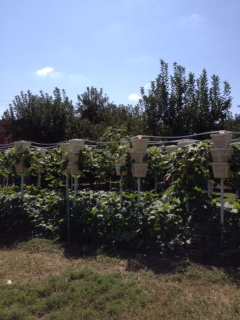 York, Carolina del Sur: Windy Hill Orchards